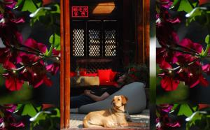 Photo of Lijiang Lazy Tiger Inn