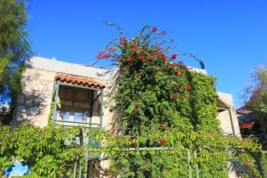 Green House Apart Hotel, Aparthotels  Gümbet - big - 67