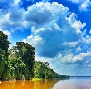 Photo of Bufeo Colorado Amazonas