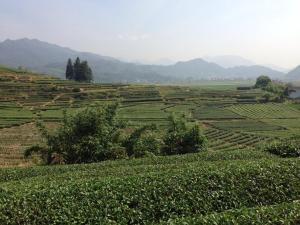 Photo of Yibao White Coffee Wuyishan Homestay