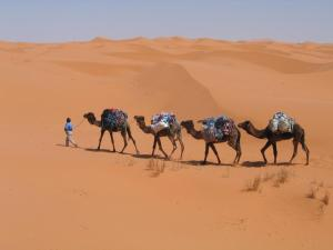 Camel Trek Bivouac, Luxury tents  Merzouga - big - 7