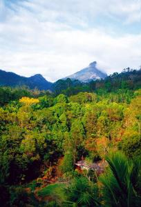 Photo of Mt Warning Rainforest Retreat