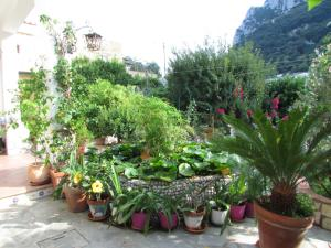 B&B Palazzo a Mare, Bed and breakfasts  Capri - big - 7