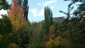 Woodlands Retreat, Penziony  Clarens - big - 37