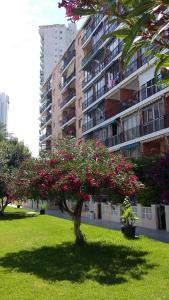 Apartment Hannibal Benidorm, Apartmanok  Cala de Finestrat - big - 18