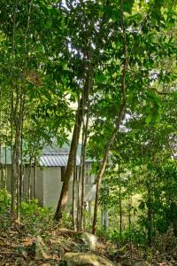 Chestnut Hill Eco Resort, Bed and Breakfasts  Hat Yai - big - 19