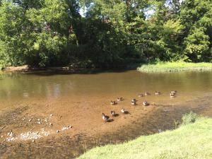 Pigeon River Inn, Hotely  Pigeon Forge - big - 28