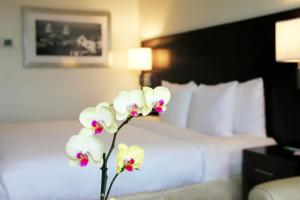 Superior King Room with free airport shuttle