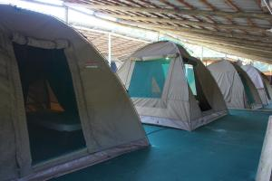 Safari Tent - Twin Room