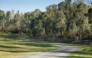 Saladin Lodge, Bed & Breakfasts  Narbethong - big - 33