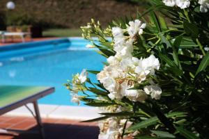 Le Fontane, Farm stays  Urbino - big - 7