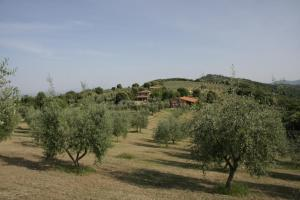 Photo of The Country House Montali