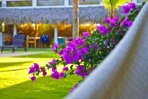 Arganama Guesthouse, Chaty  Playa Coronado - big - 10