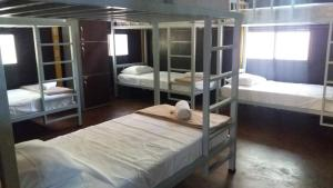 Single Bed in  6 Men -Bed Dormitory Room