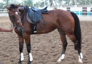 Creo Equestrian and Country Club, Penziony  Barka - big - 16