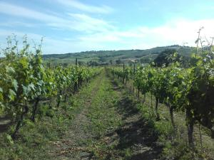 Agriturismo da Remo, Farm stays  Magliano in Toscana - big - 31