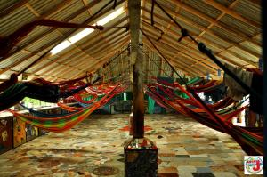 Hammock in Mixed Dormitory Room