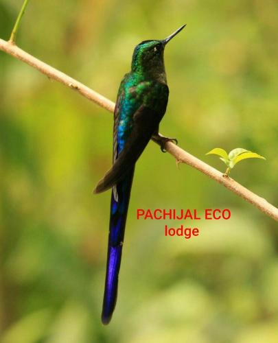 Reserva Pachijal Photo