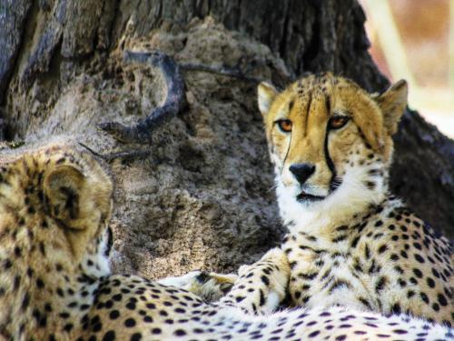 Hoedspruit Endangered Species Centre Photo