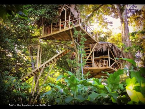 Jungle Treehouse by the Sea, Paunch