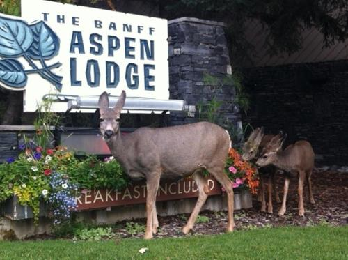 Banff Aspen Lodge Photo