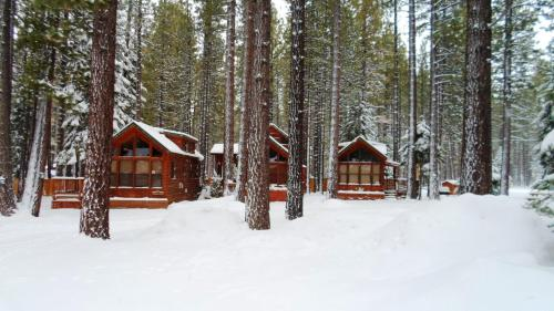 Cedar Pines Resort Photo