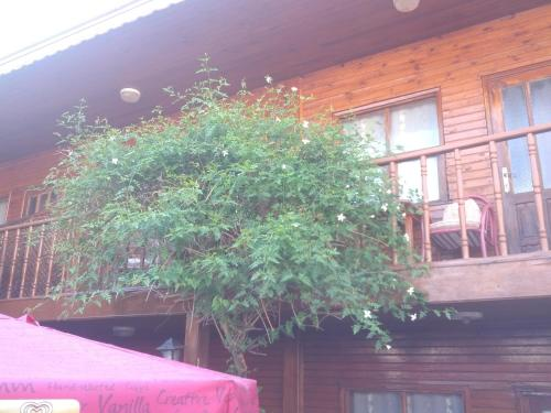 Side Rose Motel ulaşım