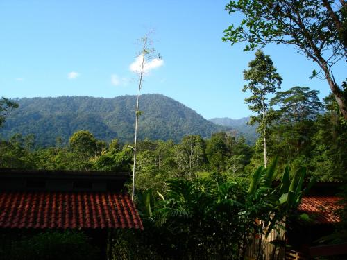 Selva Bananito Lodge Photo