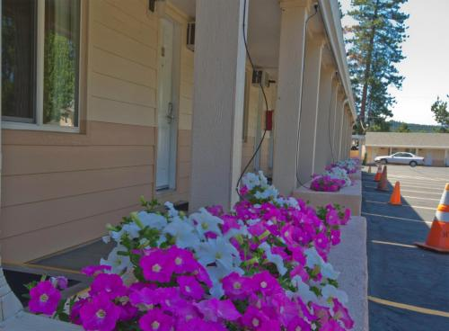Shasta Pines Motel Photo