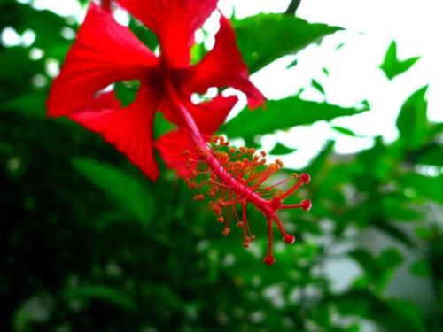 Hibiscus House Bed and Breakfast Photo