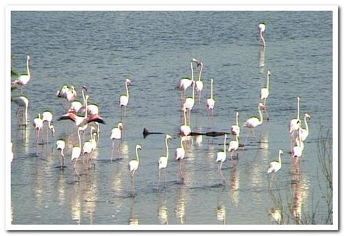Flamingo Lake Photo
