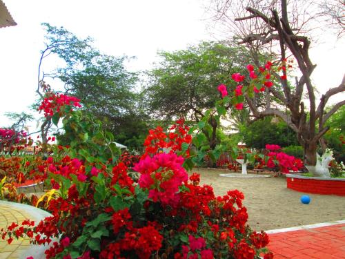 El Jardín de Playas Photo