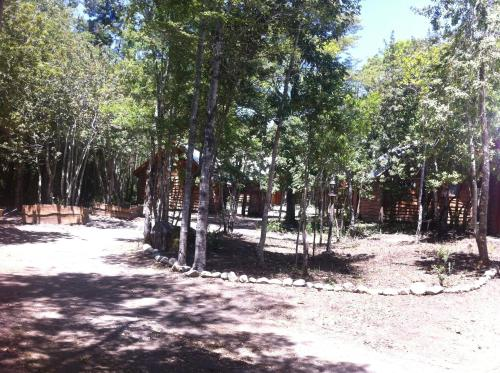 Bosque de Pucon Photo