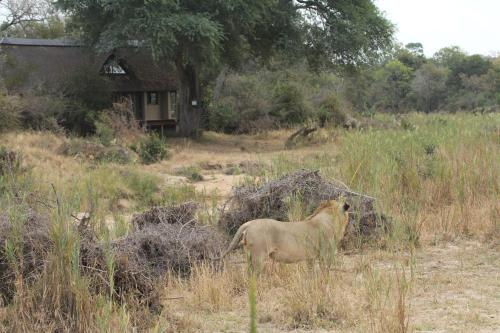 The River Lodge At Thornybush Photo