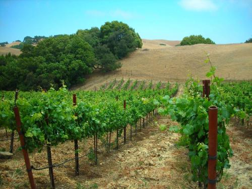 Asuncion Ridge Vineyards and Inn - Paso Robles, CA 93446