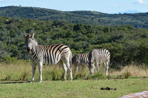JBay Zebra Lodge Photo