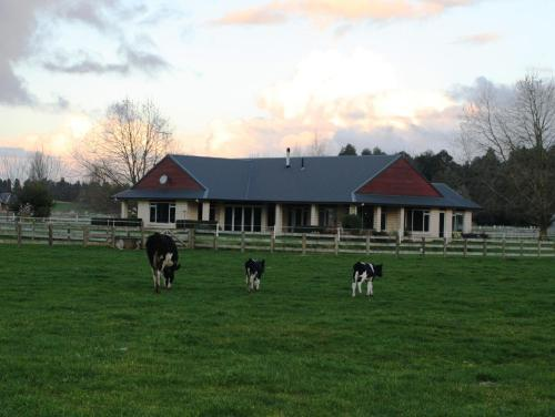 Amberfields Bed and Breakfast, Pirongia