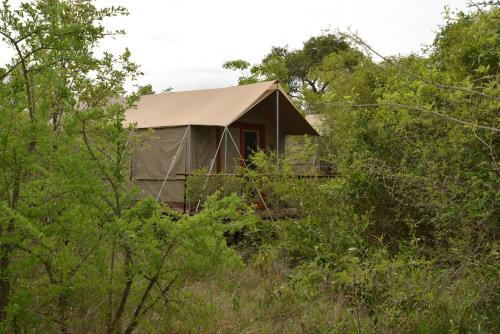 The Wild Olive Tree Camp Photo