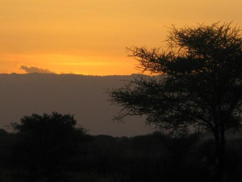 Tembo Tarangire Lodge & Camp - arusha -