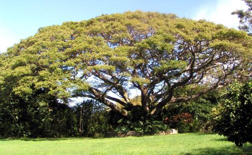Banyan Tree Bed and Breakfast Retreat - Makawao, HI 96768