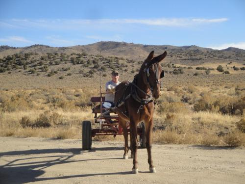N2 Mules Ranch Photo