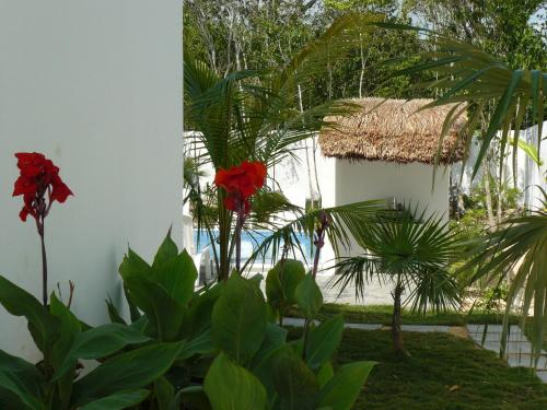 Residence Robinson Tulum Photo