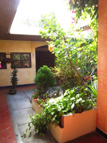 Chipilapa Guesthouse