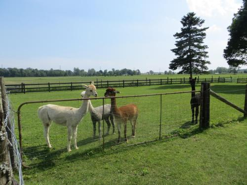 R&F Alpacas B&B Photo