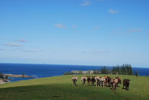 Coast Norfolk Island Photo