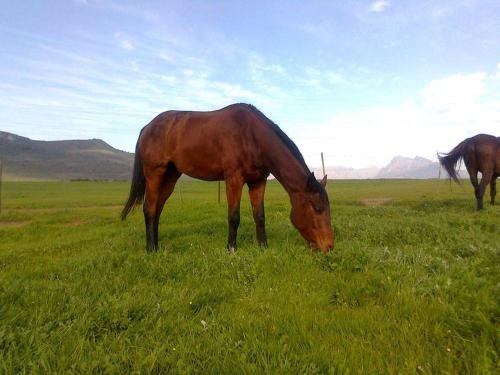 Paarl Diamant Equestrian and Guest Farm Photo