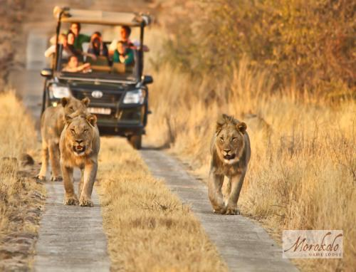Morokolo Game Lodge Photo