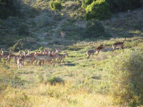 Kudu Ridge Game Lodge Photo