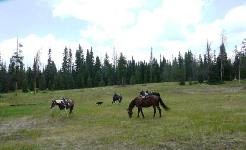 Medicine Bow Lodge Photo