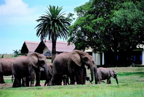Gorah Elephant Camp Photo